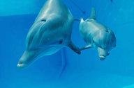 'Dolphin Tale 2' Trailer